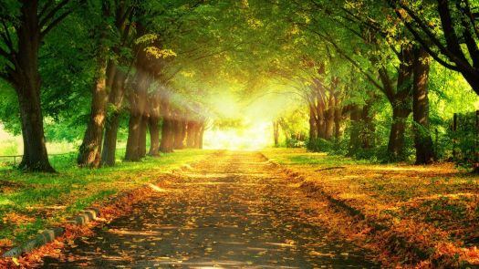 Chemin_en_automne_1920x1080